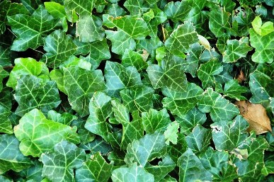 image of plants that absorb humidity from air