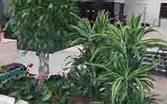 namen-uporabe-notranje-rastline-small-bitrate