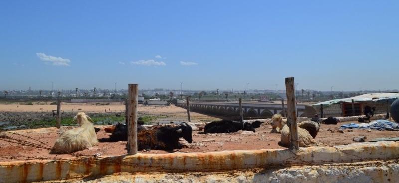 Le marabout de Sidi Abderrahmane 3