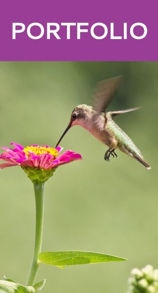 Portfolio - Hummingbird Marketing Services — Web Design, Social Media, Publicity, Content Writing, Advertising, SEO, Analytics, Consulting, Branding, and Other Marketing Services