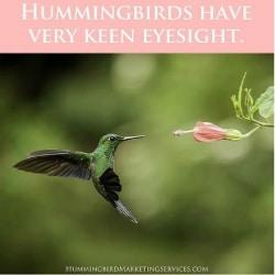 Social Media Post Example: Hummingbirds have very keen eyesight
