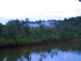 Jungle fever and Buena Ventura 085