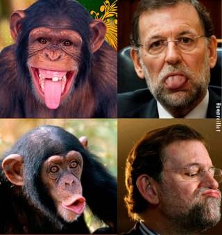 rajoy-chimpance-bobo