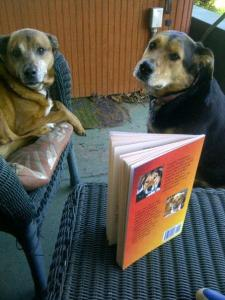 frankie and lulu looking at book
