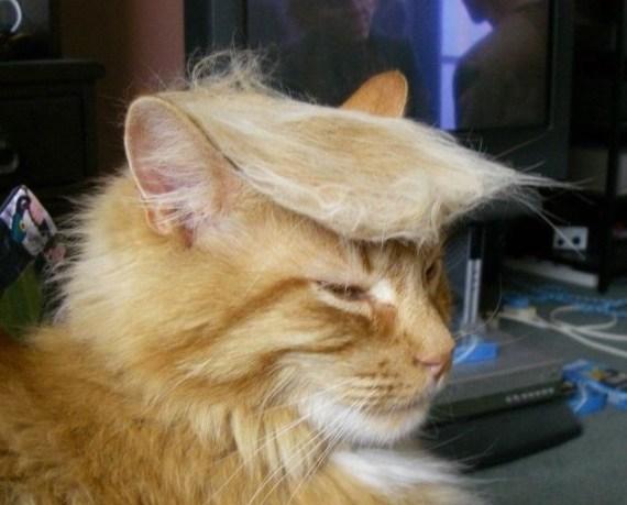 hairofthecat