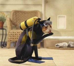 pets-in-costumes