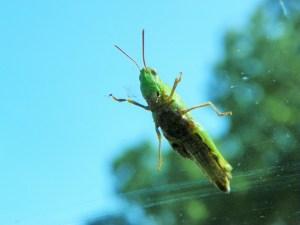 grasshoper-from-inside