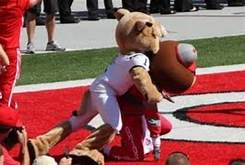 Image result for tiger cardinal mascot fight