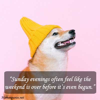 Lazy sunday quotes funny