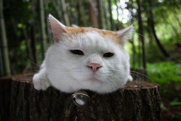 Real Life Garfield Cat Humor Shaking