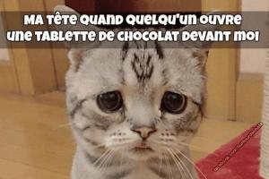 Ma tête quand quelqu'un ouvre une tablette de chocolat devant moi