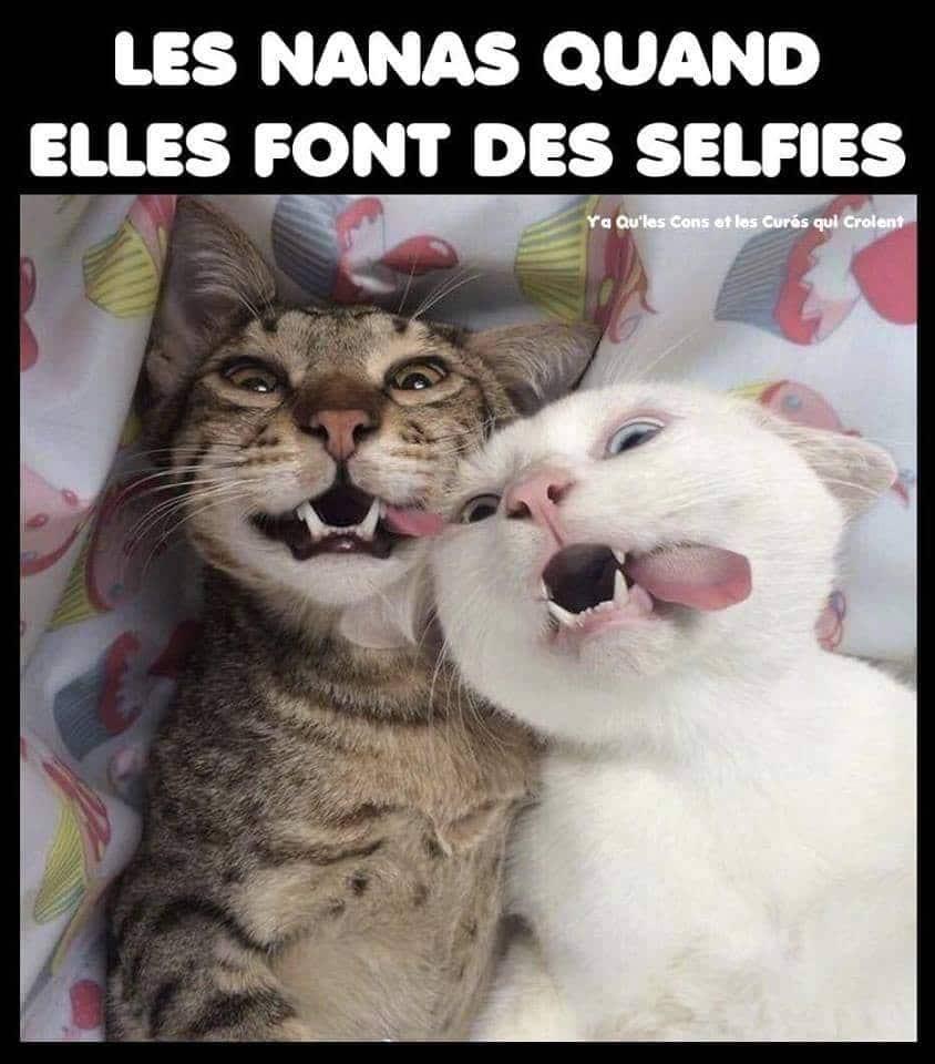 Les nanas quand elles font des selfies