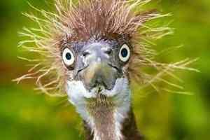Quand tu décides de ne pas te laver les cheveux le matin