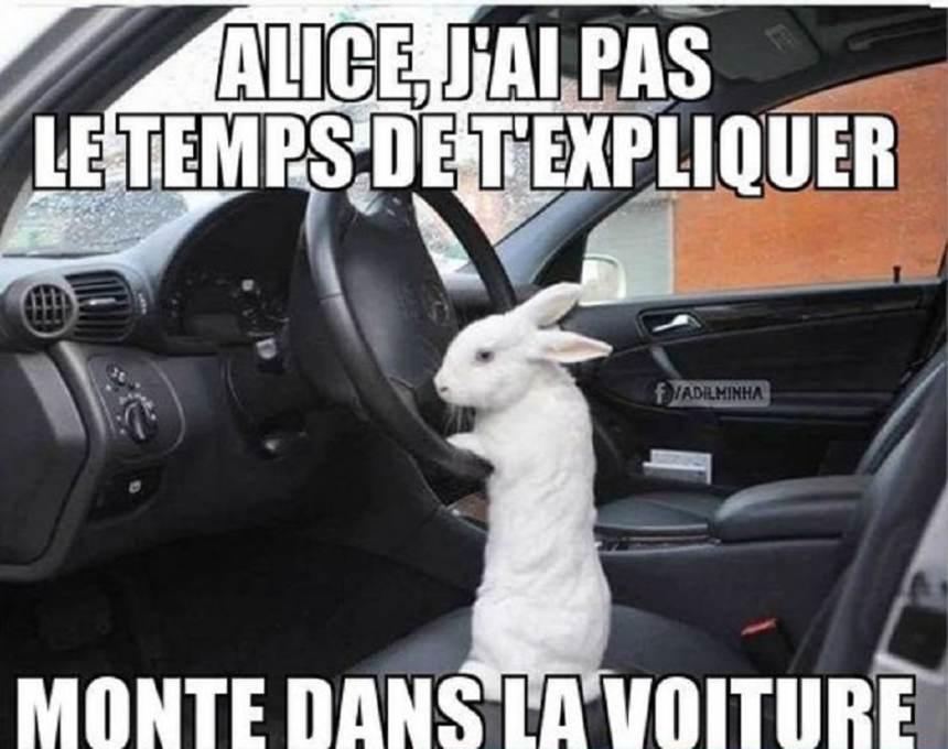 Alice, j'ai pas le temps de t'expliquer monte dans la voiture