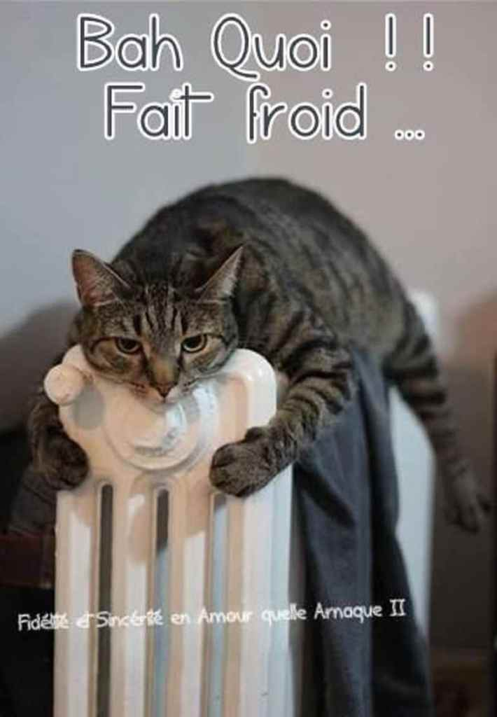Bah quoi !! Il fait froid...