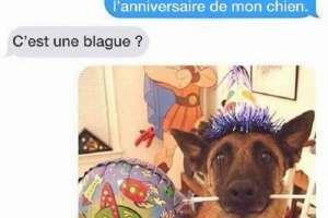 C'est l'anniversaire de mon chien