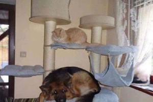 Je pense que mon chien passe trop de temps avec mon chat