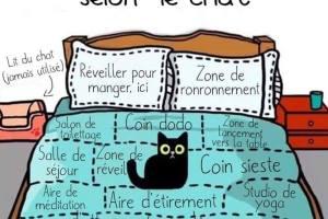 La carte du lit selon le chat
