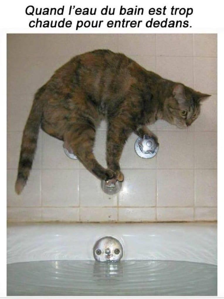 Quand l'eau du bain est trop chaude pour entrer dedans