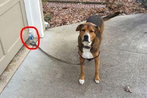 J'ai attaché mon chien le temps d'aller chercher mon manteau.