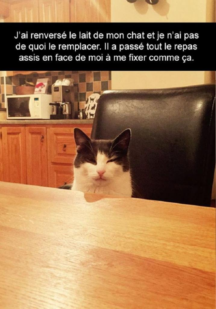 J'ai renversé le lait de mon chat...