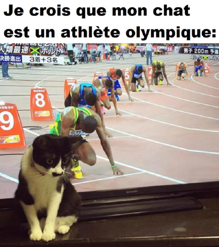 Je crois que mon chat est un athlète olympique