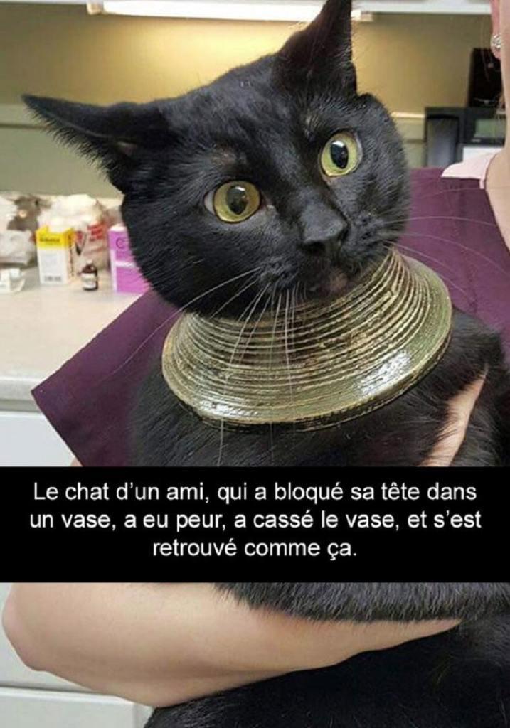 Le chat d'un ami, qui a bloqué sa tête dans un vase