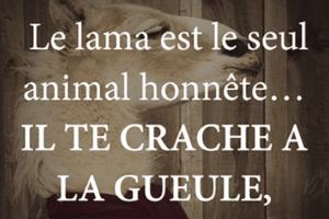 Le lama est le seul animal honnête...
