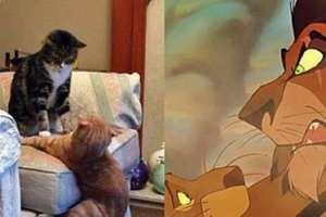 Le moment ou tes chats reproduisent la scène du Roi Lion...
