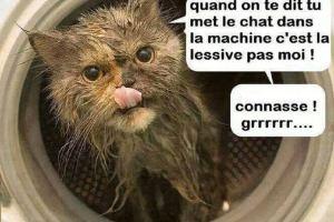 Quand on te dit tu met le chat dans la machine