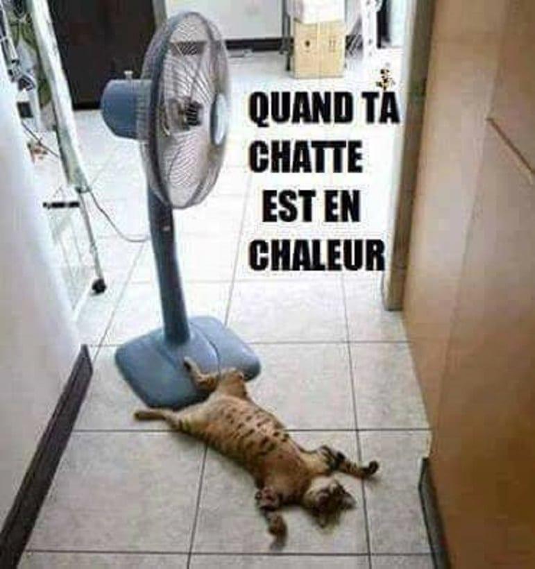 Quand ta chatte est en chaleur