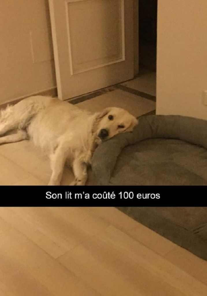 Son lit m'a coûté 100 euros