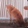 Mesurer un chien vs Mesurer un chat