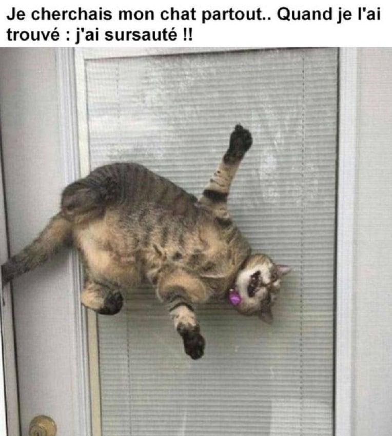 Je cherchais mon chat partout