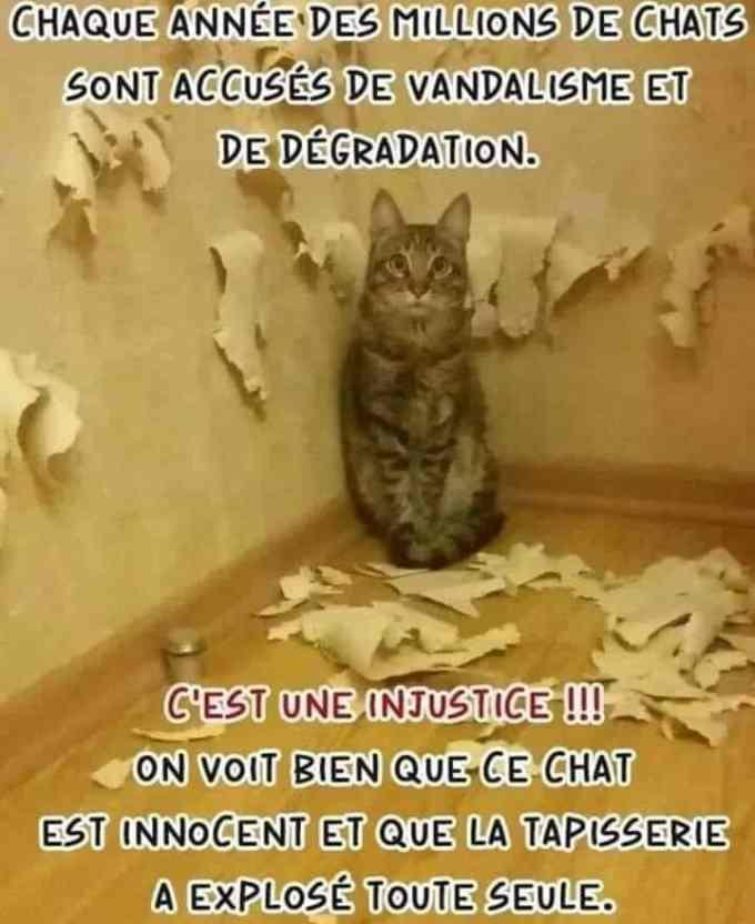 Chaque année des millions de chats sont accusés de vandalisme