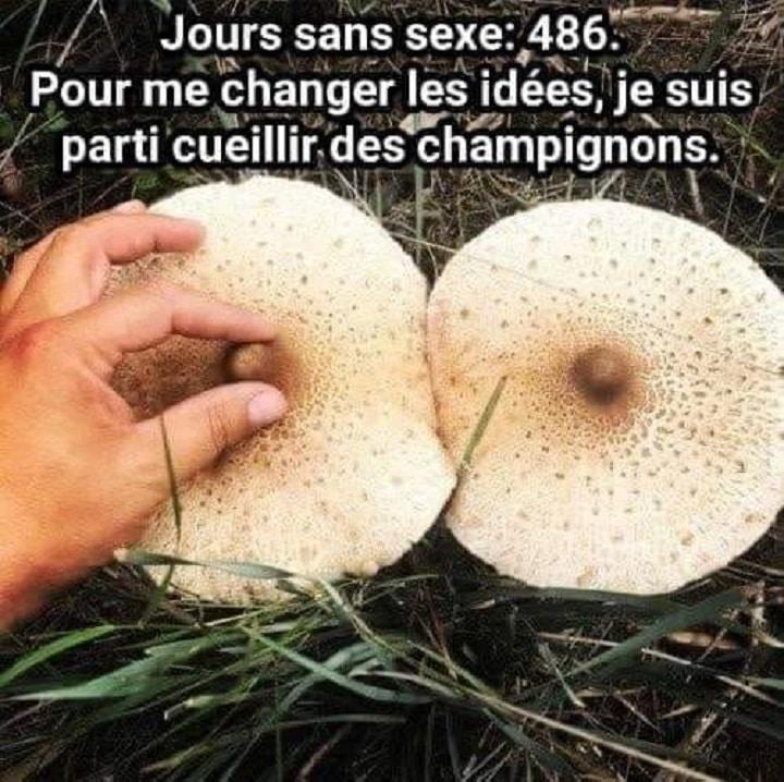 Pour me changer les idées, je suis parti cueillir des champignons