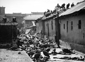 Vultures feeding on corpses lying abandoned in alleyway after bloody rioting between Hindus and Muslims.
