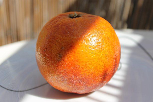 תפוז דם. טעים, בריא ונוסטלגי.