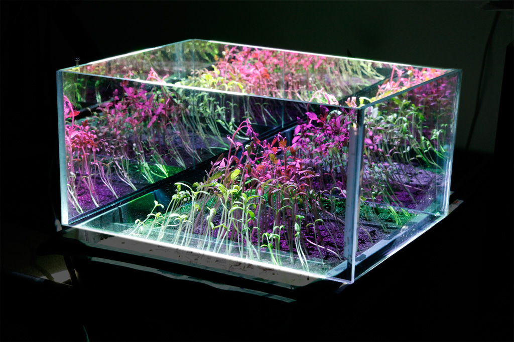 How To Choose A Grow Light  Humus Products