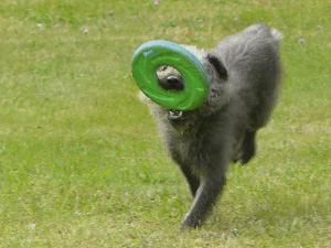 Hundefrisbee Test