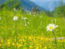 Fokus mal anders - herrlich grüne Natur