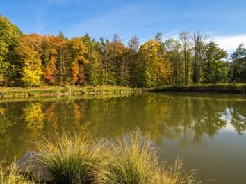 Prächtige Herbstfarben am Ursee