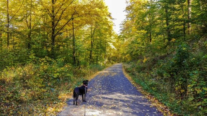 Herbstwald auf dem Rückweg zum Parkplatz