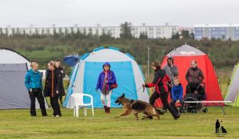Hundasýning 23.07 2016 í Víðidalnum nr 1 106