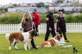 Hundasýning 23.07 2016 í Víðidalnum nr 1 177