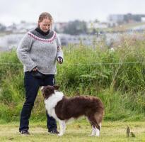 Hundasýning 24.07.2016 í Víðidalnum 1017