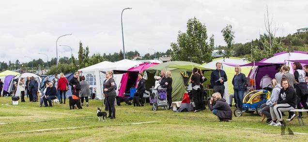 Hundasýning 24.07.2016 í Víðidalnum 248