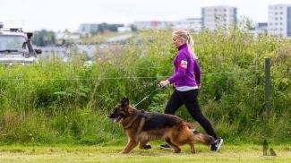Hundasýning 24.07.2016 í Víðidalnum 782