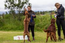 Hundasýning 24.07.2016 í Víðidalnum 857