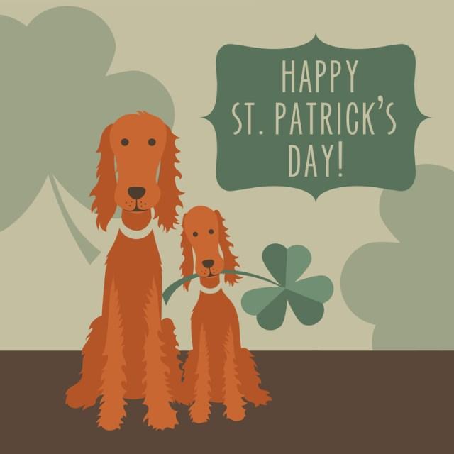 St. Patrick´s Day Irische Setter